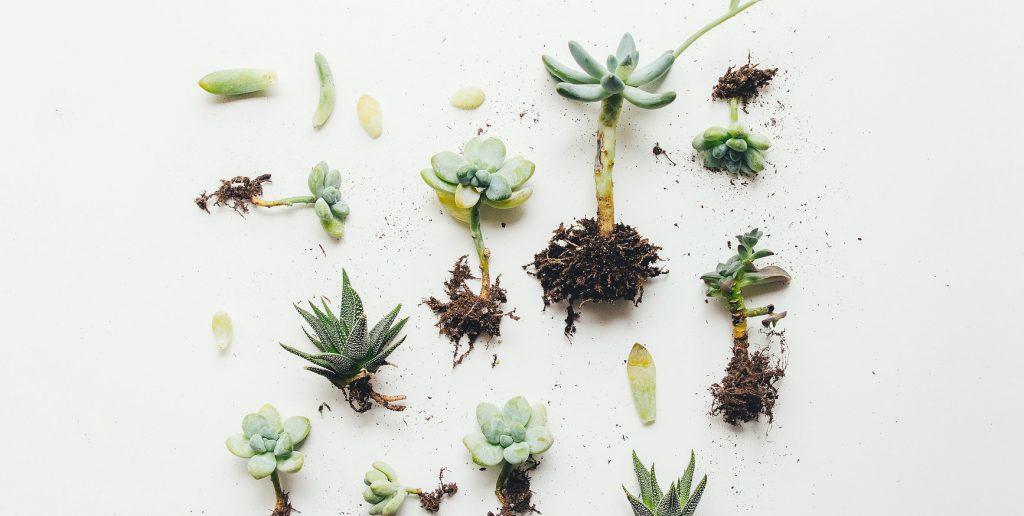 Extrait livre : Transport et logistique des plantes (par HESI)