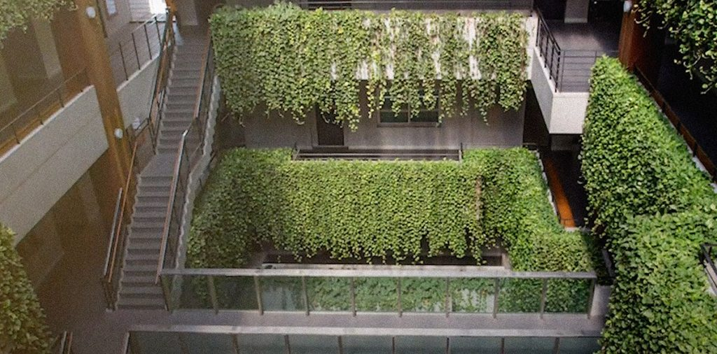 Des jardins verticaux contre la pollution en Inde