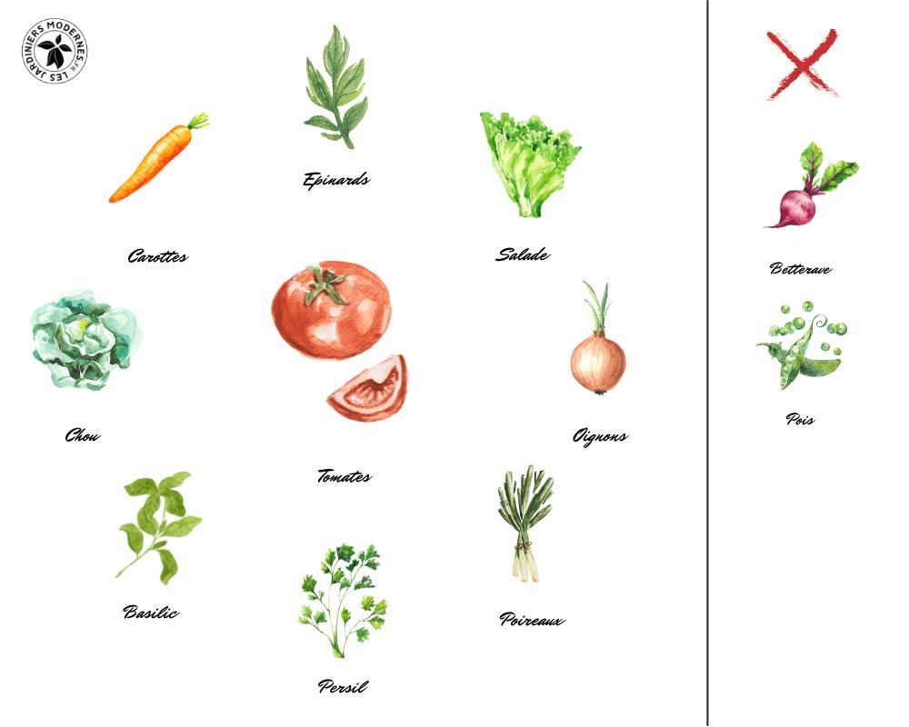 Cultures Associées Tomates Hydro-Culture