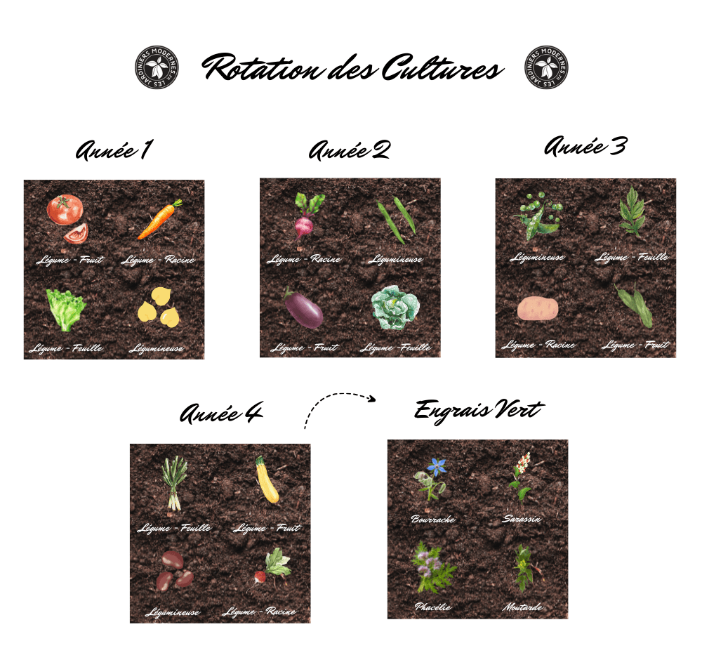 Guide Rotation Cultures Engrais Vert Les Jardiniers Modernes